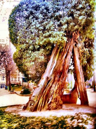 medium_plus_vieil_arbre_de_Paris.jpg